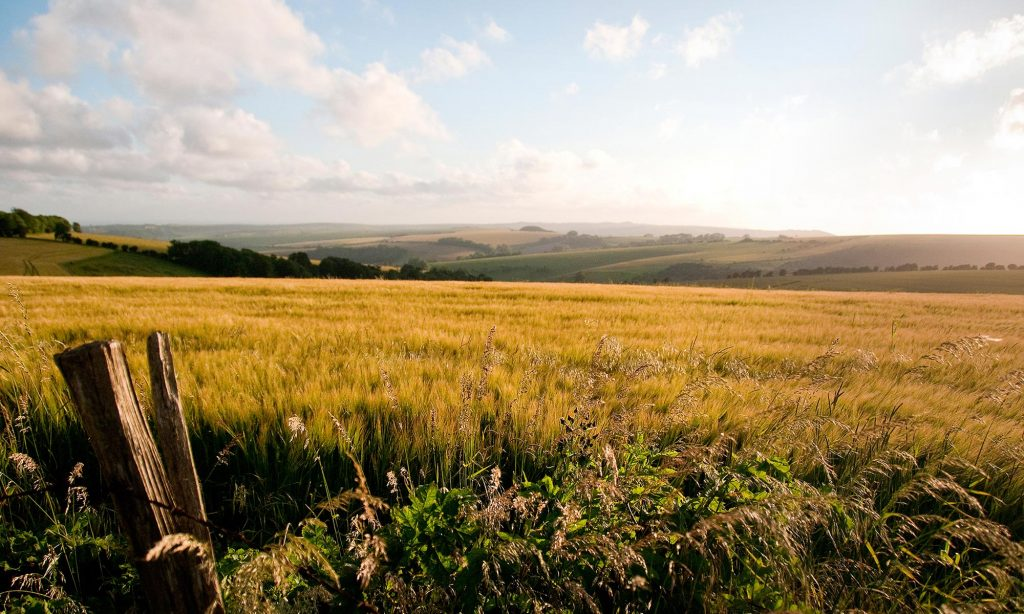South-Downs-Crops